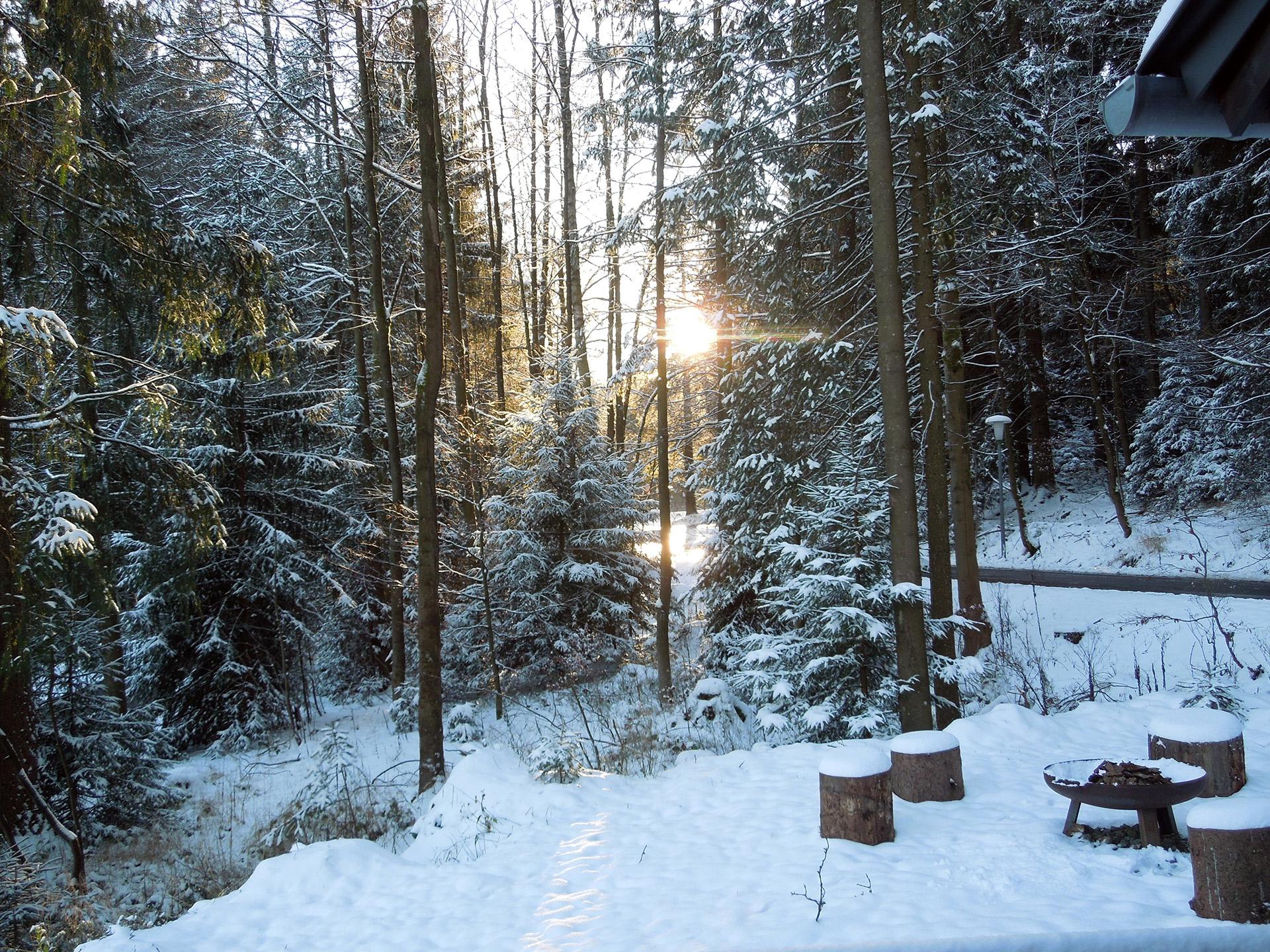 Blockhaus-Bodefall-Außenansicht-Blick-im-Winter-in-den-Wald