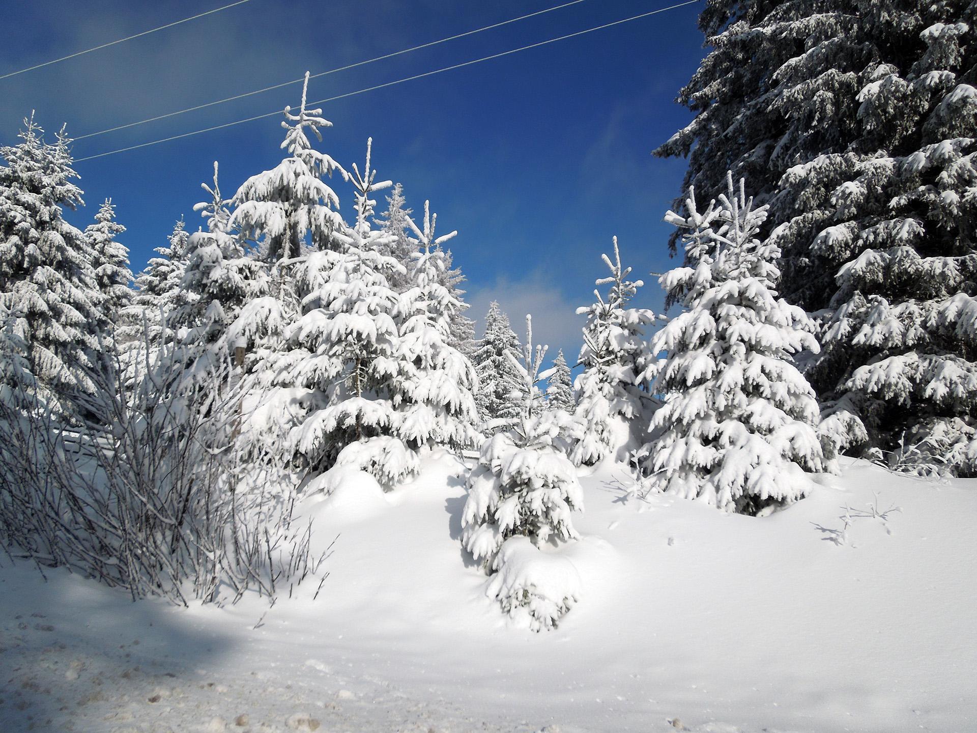 Blockhaus-Bodefall-Umgebung-Bäume-im-Schnee