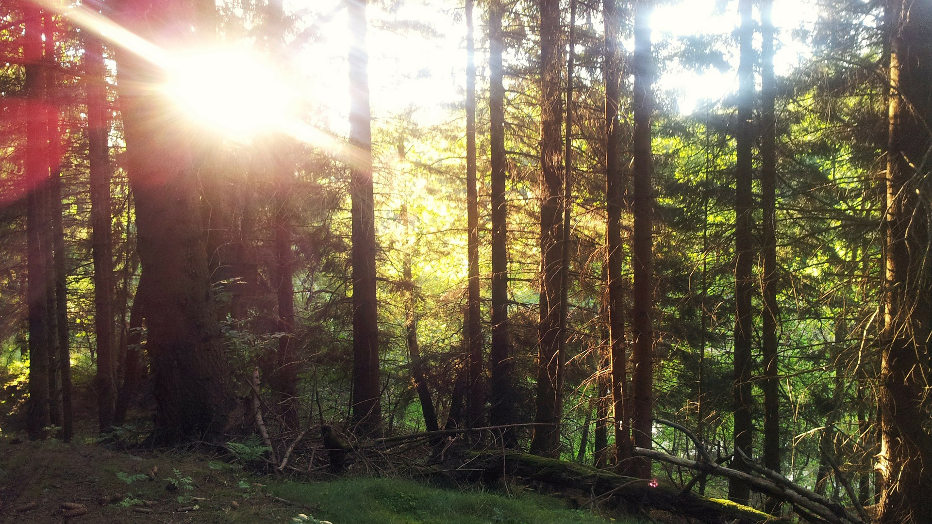 Blockhaus-Bodefall-Sommer-Natur-Wald